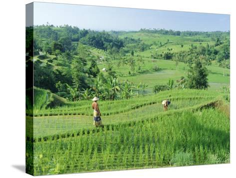 Rice Terraces Near Jatiluwih, Bali, Indonesia-Gavin Hellier-Stretched Canvas Print