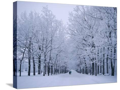 Catherine's Park in February, Tsarske Seloe (Puskin), St. Petersburg, Russia-Anthony Waltham-Stretched Canvas Print