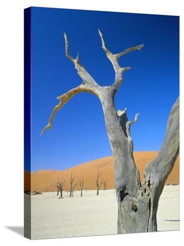 Dead Trees and Sun-Baked Pan, Dead Vlei, Namib Naukluft Park, Namibia-Lee Frost-Stretched Canvas Print