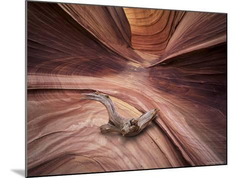 Sandstone Wave, Paria Canyon, Vermillion Cliffs Wilderness, Arizona, USA-Lee Frost-Mounted Photographic Print