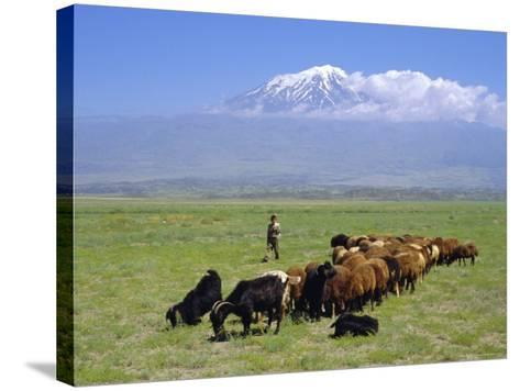 Herd of Goats and Goatherder in the Plains Beneath Mount Ararat, Turkey, Europe-Charles Bowman-Stretched Canvas Print