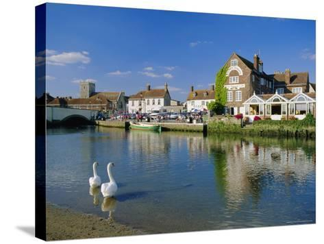Swans on the River Frome, Wareham, Dorset, England, UK-Ruth Tomlinson-Stretched Canvas Print