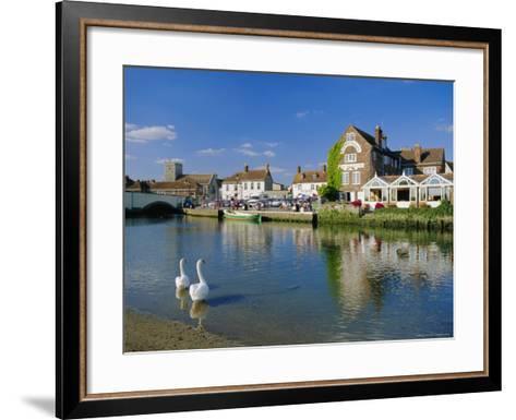Swans on the River Frome, Wareham, Dorset, England, UK-Ruth Tomlinson-Framed Art Print