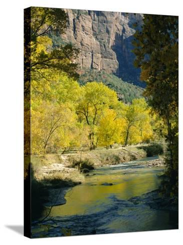 Golden Cottonwood Trees on Banks of the Virgin River, Zion National Park, Utah, USA-Ruth Tomlinson-Stretched Canvas Print