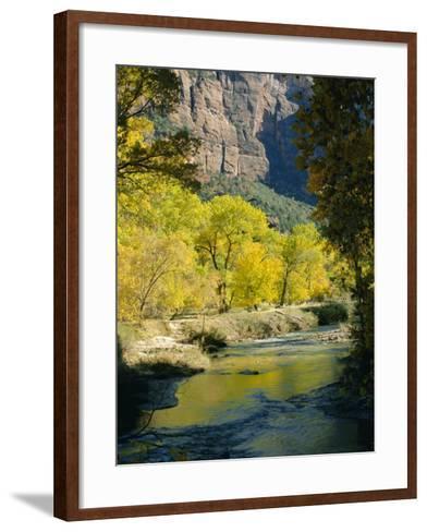 Golden Cottonwood Trees on Banks of the Virgin River, Zion National Park, Utah, USA-Ruth Tomlinson-Framed Art Print