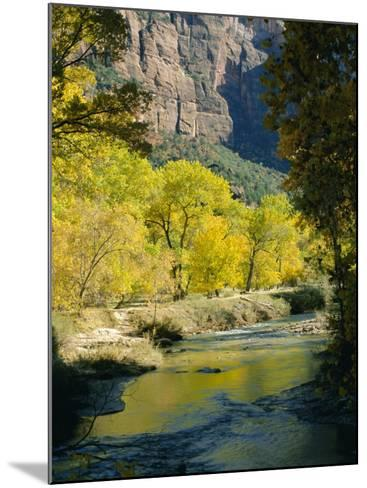 Golden Cottonwood Trees on Banks of the Virgin River, Zion National Park, Utah, USA-Ruth Tomlinson-Mounted Photographic Print