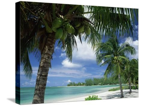 Palms on Shore, Cayman Kai Near Rum Point, Grand Cayman, Cayman Islands, West Indies-Ruth Tomlinson-Stretched Canvas Print
