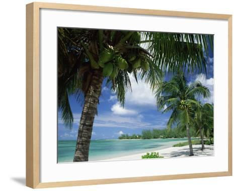 Palms on Shore, Cayman Kai Near Rum Point, Grand Cayman, Cayman Islands, West Indies-Ruth Tomlinson-Framed Art Print