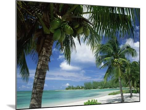 Palms on Shore, Cayman Kai Near Rum Point, Grand Cayman, Cayman Islands, West Indies-Ruth Tomlinson-Mounted Photographic Print