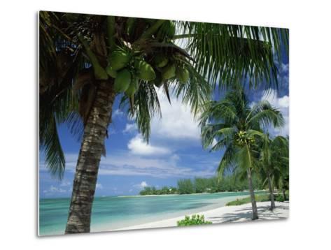 Palms on Shore, Cayman Kai Near Rum Point, Grand Cayman, Cayman Islands, West Indies-Ruth Tomlinson-Metal Print
