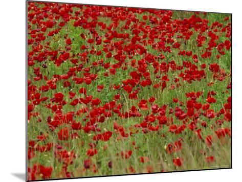 Poppy Field, Spain, Europe-John Miller-Mounted Photographic Print