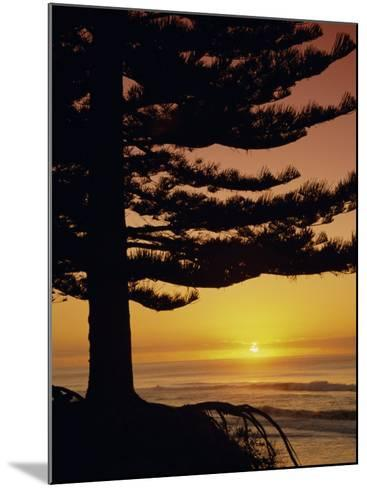 Sunrise, Pine Beach, Gisborne, East Coast, North Island, New Zealand, Pacific-Dominic Webster-Mounted Photographic Print