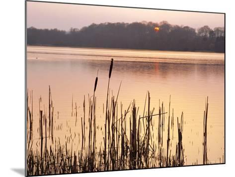 Frensham Great Pond at Sunset with Reeds in Foreground, Frensham, Surrey, England-Pearl Bucknell-Mounted Photographic Print