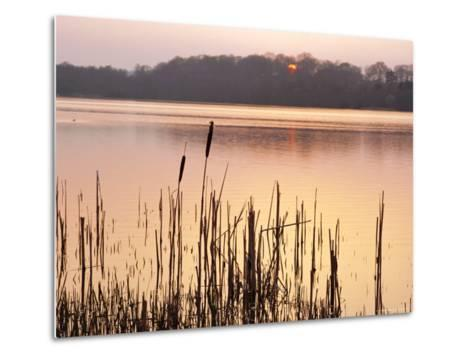 Frensham Great Pond at Sunset with Reeds in Foreground, Frensham, Surrey, England-Pearl Bucknell-Metal Print