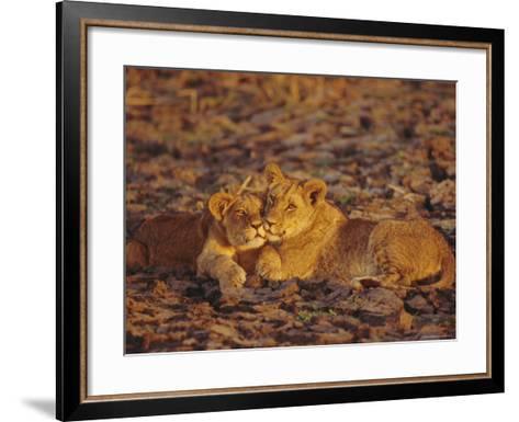 Lioness and Cub, Okavango Delta, Botswana, Africa-Paul Allen-Framed Art Print
