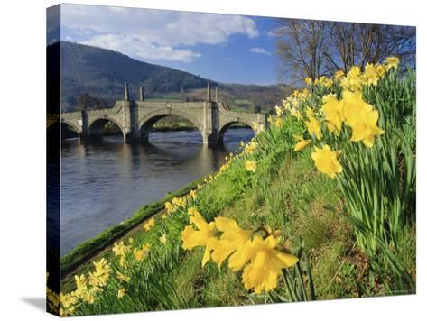 Daffodils by the River Tay and Wade's Bridge, Aberfeldy, Perthshire, Scotland, UK, Europe-Kathy Collins-Stretched Canvas Print