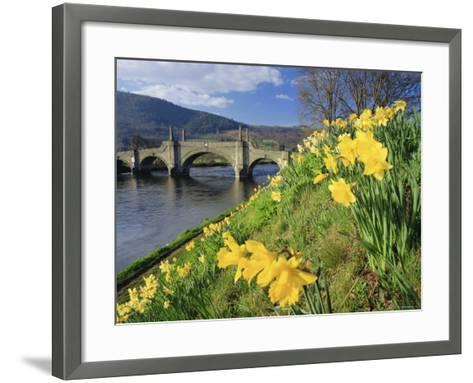Daffodils by the River Tay and Wade's Bridge, Aberfeldy, Perthshire, Scotland, UK, Europe-Kathy Collins-Framed Art Print