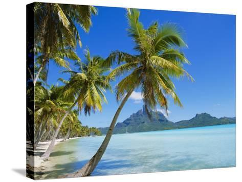 Palm Trees and Beach, Bora Bora, Tahiti, Society Islands, French Polynesia, Pacific-Mark Mawson-Stretched Canvas Print