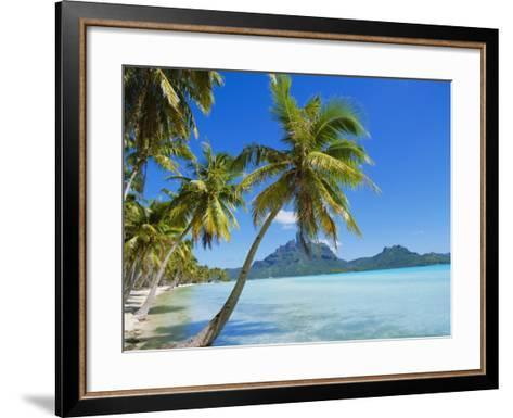 Palm Trees and Beach, Bora Bora, Tahiti, Society Islands, French Polynesia, Pacific-Mark Mawson-Framed Art Print
