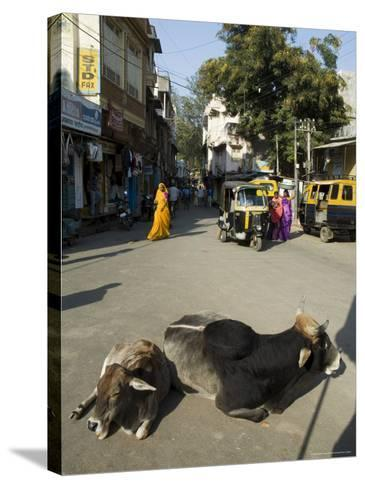 Holy Cows on Streets of Dungarpur, Rajasthan, India-Robert Harding-Stretched Canvas Print