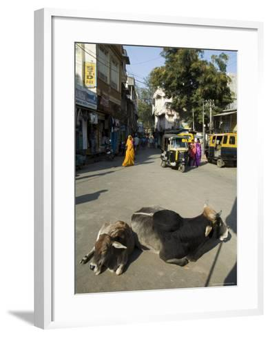 Holy Cows on Streets of Dungarpur, Rajasthan, India-Robert Harding-Framed Art Print