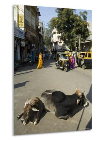 Holy Cows on Streets of Dungarpur, Rajasthan, India-Robert Harding-Metal Print