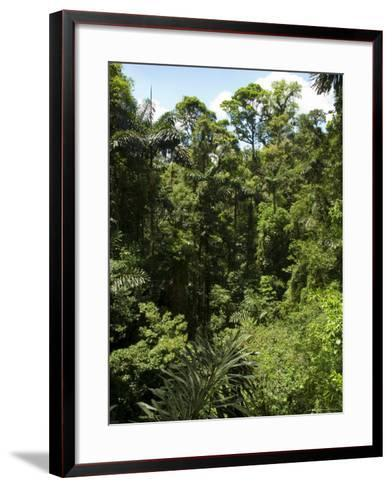 Rainforest Vegitation, Hanging Bridges Walk, Arenal, Costa Rica-Robert Harding-Framed Art Print