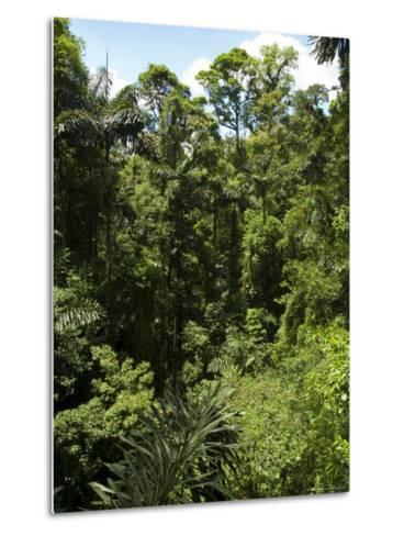 Rainforest Vegitation, Hanging Bridges Walk, Arenal, Costa Rica-Robert Harding-Metal Print