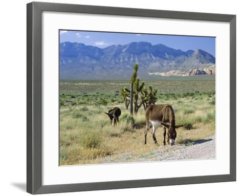 Wild Mules, the Spring Mountains, Nevada, USA-Fraser Hall-Framed Art Print