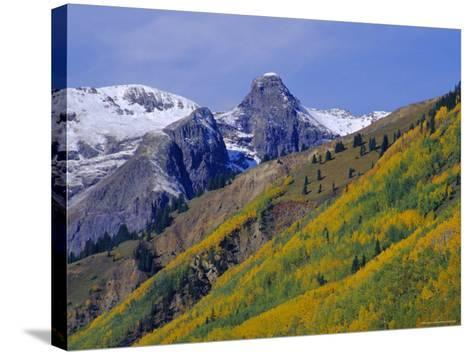 Aspen Pines and Snowy Peaks,San Juan Skyway, Colorado, USA-Jean Brooks-Stretched Canvas Print