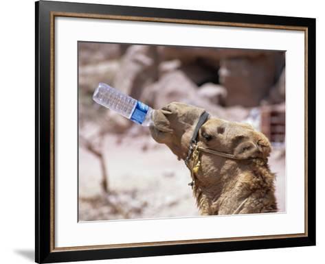 Camel Drinking, Jordan, Petra-Neale Clarke-Framed Art Print