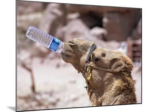 Camel Drinking, Jordan, Petra-Neale Clarke-Mounted Photographic Print