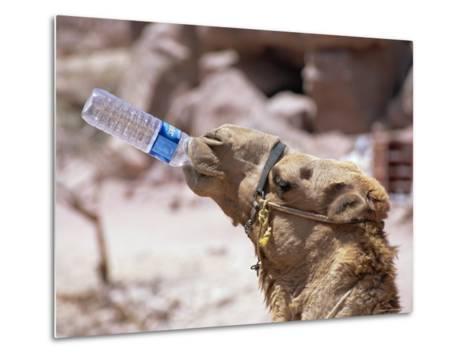 Camel Drinking, Jordan, Petra-Neale Clarke-Metal Print