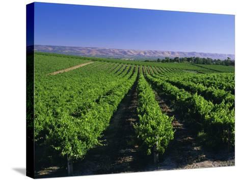 Mclaren Vale-Oliverhill Wines Vineyards, South Australia, Australia-Neale Clarke-Stretched Canvas Print