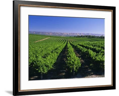 Mclaren Vale-Oliverhill Wines Vineyards, South Australia, Australia-Neale Clarke-Framed Art Print