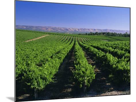 Mclaren Vale-Oliverhill Wines Vineyards, South Australia, Australia-Neale Clarke-Mounted Photographic Print