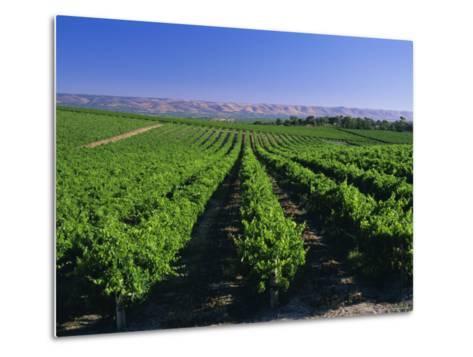 Mclaren Vale-Oliverhill Wines Vineyards, South Australia, Australia-Neale Clarke-Metal Print