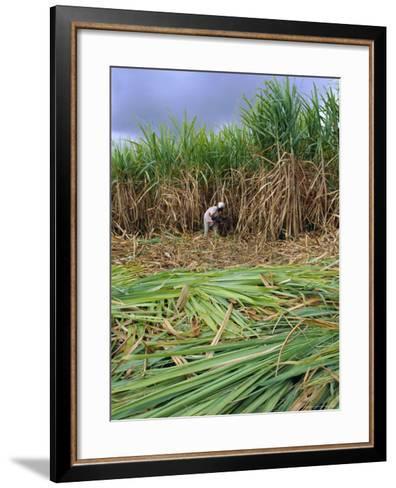 Sugar Cane Cutting by Hand, Reunion Island, Indian Ocean-Sylvain Grandadam-Framed Art Print