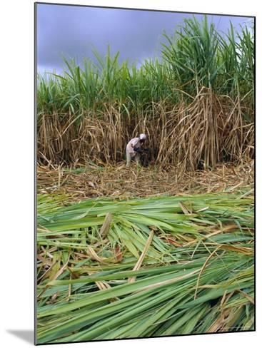 Sugar Cane Cutting by Hand, Reunion Island, Indian Ocean-Sylvain Grandadam-Mounted Photographic Print