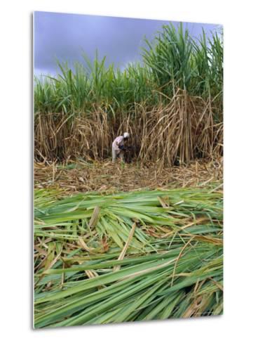 Sugar Cane Cutting by Hand, Reunion Island, Indian Ocean-Sylvain Grandadam-Metal Print