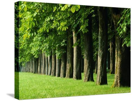 Line of Trees, Touraine, Centre, France, Europe-Sylvain Grandadam-Stretched Canvas Print
