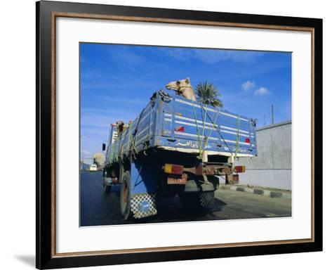 Camels Being Driven to Market in Back of Truck, Cairo, Egypt-Sylvain Grandadam-Framed Art Print