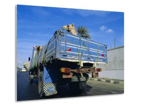 Camels Being Driven to Market in Back of Truck, Cairo, Egypt-Sylvain Grandadam-Metal Print