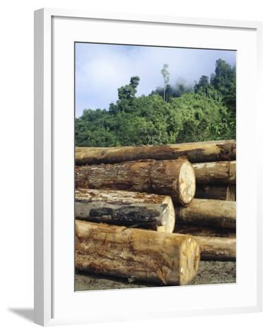 Logging in the Rain Forest, Island of Borneo, Malaysia-Anthony Waltham-Framed Art Print