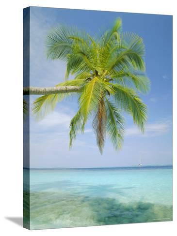 Palm Tree Overhanging the Sea, Kuda Bandos, North Male Atoll, the Maldives, Indian Ocean-Lee Frost-Stretched Canvas Print