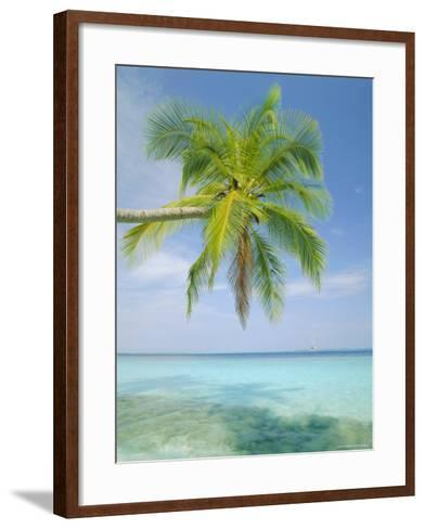 Palm Tree Overhanging the Sea, Kuda Bandos, North Male Atoll, the Maldives, Indian Ocean-Lee Frost-Framed Art Print