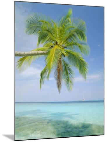 Palm Tree Overhanging the Sea, Kuda Bandos, North Male Atoll, the Maldives, Indian Ocean-Lee Frost-Mounted Photographic Print