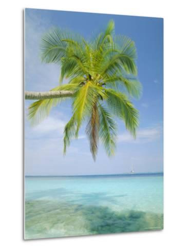 Palm Tree Overhanging the Sea, Kuda Bandos, North Male Atoll, the Maldives, Indian Ocean-Lee Frost-Metal Print