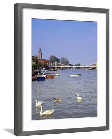 Swans on the River Thames with Suspension Bridge in the Background, England, UK-Charles Bowman-Framed Art Print