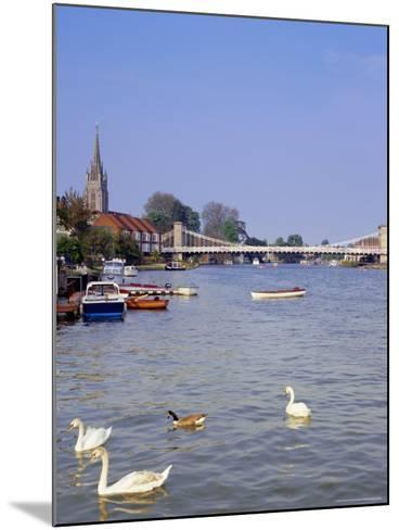 Swans on the River Thames with Suspension Bridge in the Background, England, UK-Charles Bowman-Mounted Photographic Print